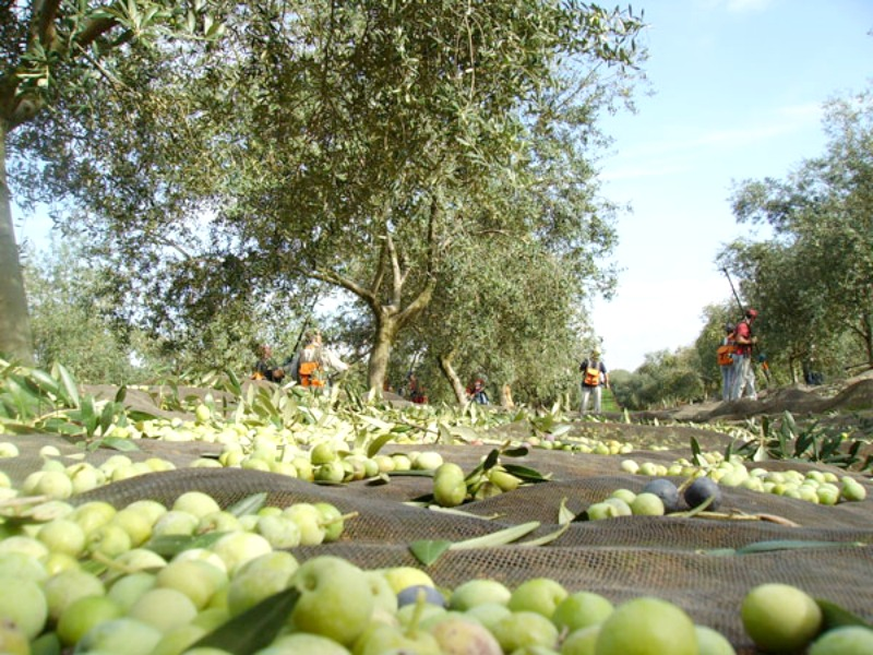 Olive Oil Experiences Perfect For An Innovative And Creative Team Building Activities